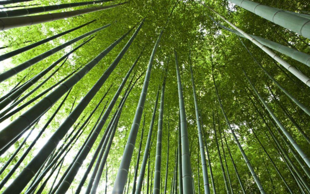 bambouseraie 3